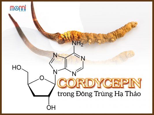 Cordycepin Trong Dong Trung Ha Thao 1